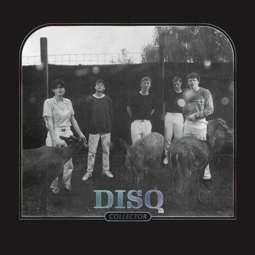disq_500x500